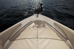 2013 - Campion Boats - 535 Forster Allante