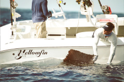 2019 - Yellowfin - 29 Offshore