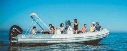 2017 - Zodiac Boats - Medline 740