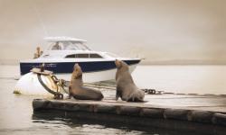 2010 - Bayliner Boats - 266 DIS