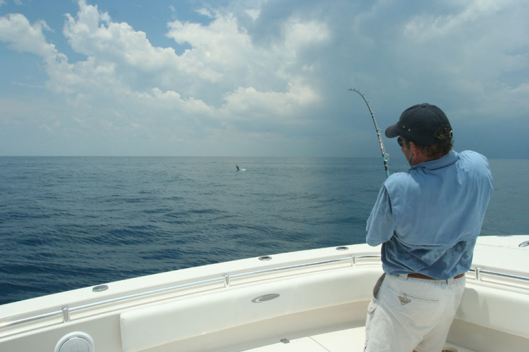 l_sailfishjumpingcobialogo