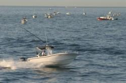 2014 - Dusky Boats - 252 Open