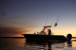 2020 - Edgewater Boats - 262 CC